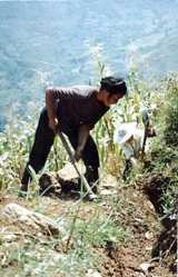 Zhushan Villager working on fields